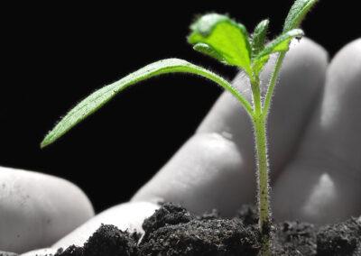 Moderne Unternehmenskultur: Nachhaltige Unternehmensentwicklung